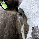 Half a Cow by leizure