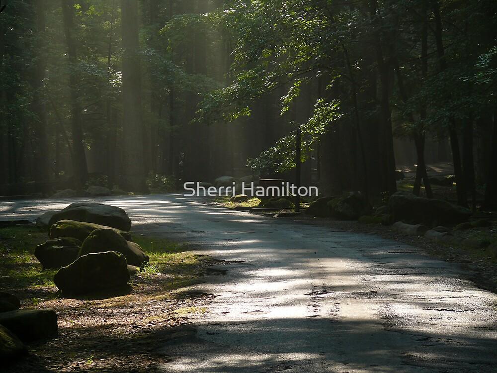 Heavenly Light by Sherri Hamilton