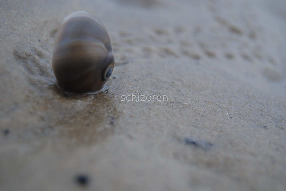 snail trail by schizoren