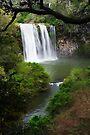 Dangar Falls at Dorrigo by Darren Stones