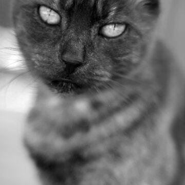 My cat Bonnie by Phoonaz
