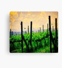Woodinville Washington - Washington Vineyard Canvas Print