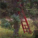 Red Ladder by Martha Medford