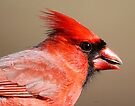 Nothern Cardinal by Dennis Cheeseman