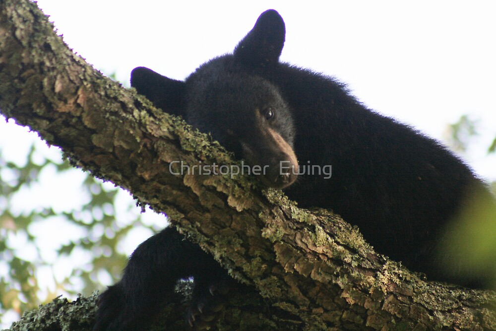 trying to take a nap by Christopher  Ewing