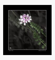 Pathway to the Crown Fine Art Poster Photographic Print