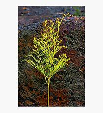 """Lone Fern"" Photographic Print"