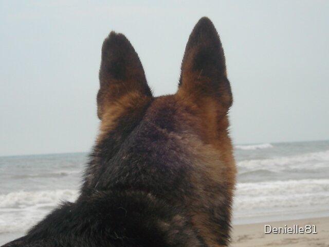 Beach Dog by Denielle81