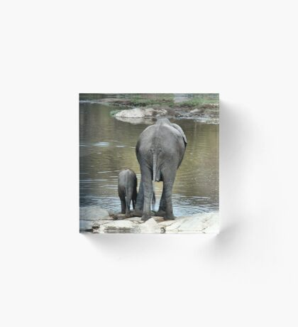 ANOTHER WONDERING MOTHER AND HER BABY -  THE AFRICAN ELEPHANT – Loxodonta Africana Acrylic Block