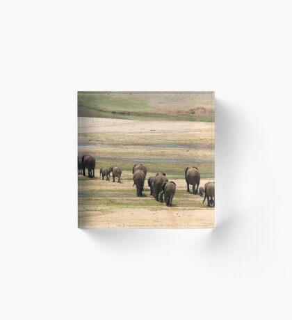 DESPERATELY SEEKING FOOD - The African Elephant Loxodonta Africana Acrylic Block
