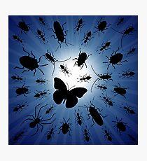 night bugs Photographic Print