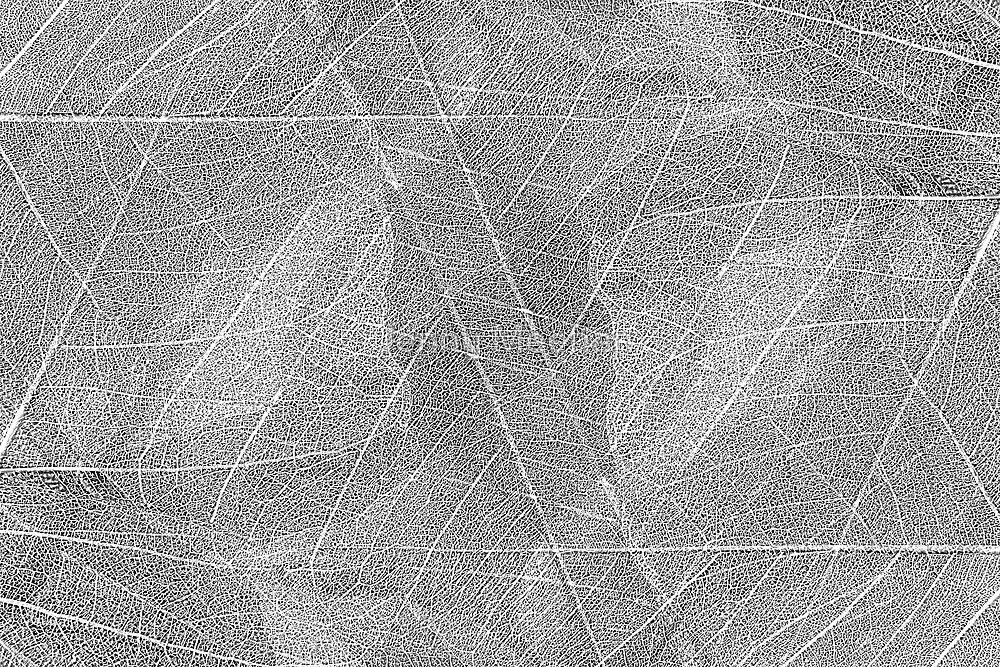 Leaf Layers by Jenny Meehan