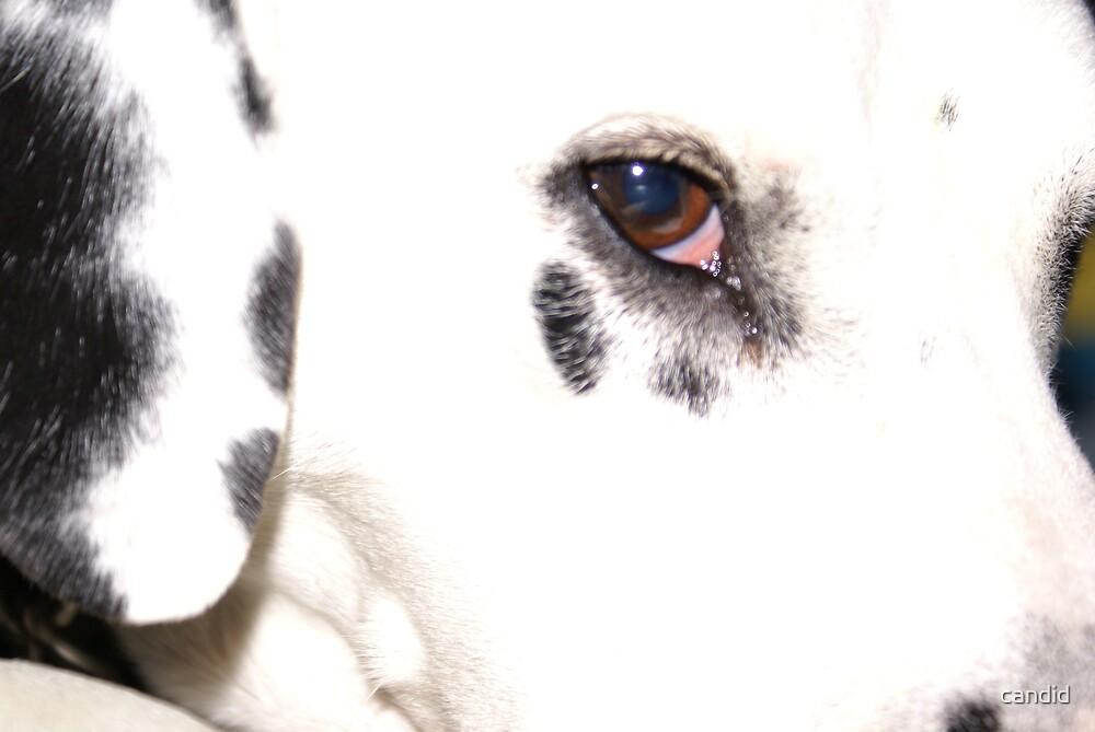 Angel dog by candid