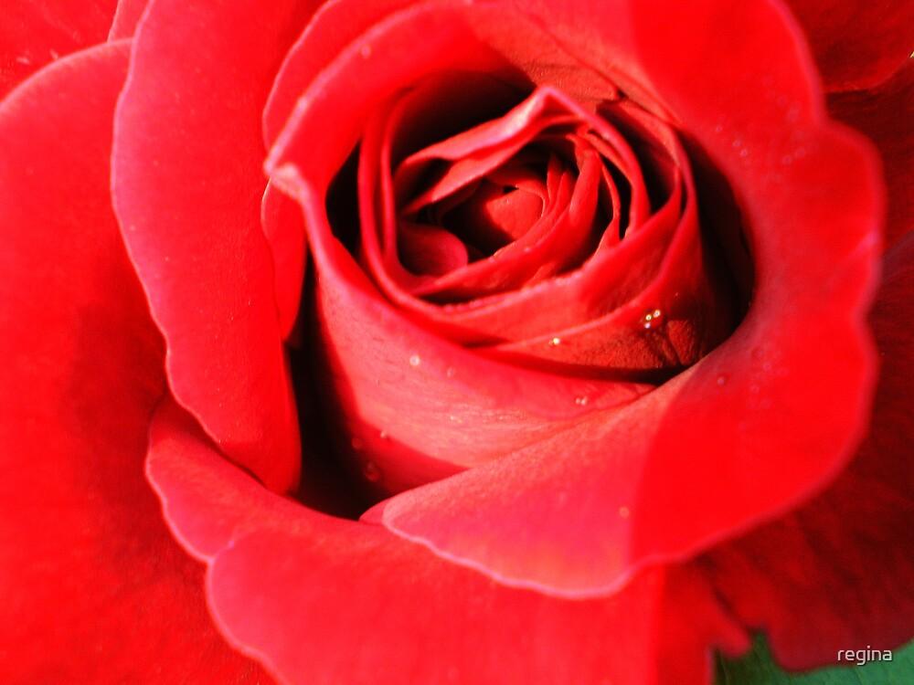 red by regina
