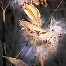 Fluffy by Maria Dryfhout