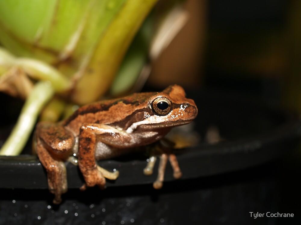 Froggy by Tyler Cochrane
