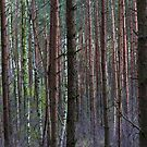 March in Woods by DAntas
