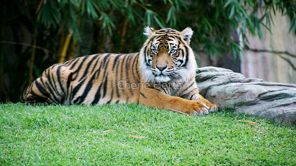Big Cat by Cherie Betts