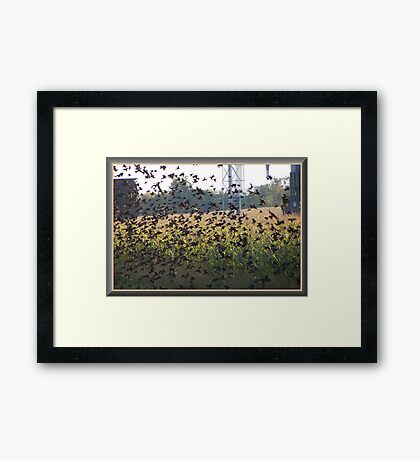 The Field Of Wings Framed Print