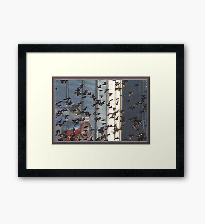 Frantic Fliers Framed Print