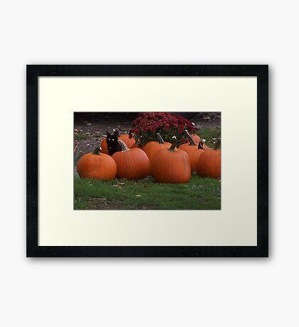 Keeper of the Pumpkins  Framed Print