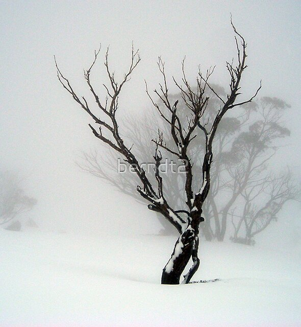 The Snow Tree by berndt2