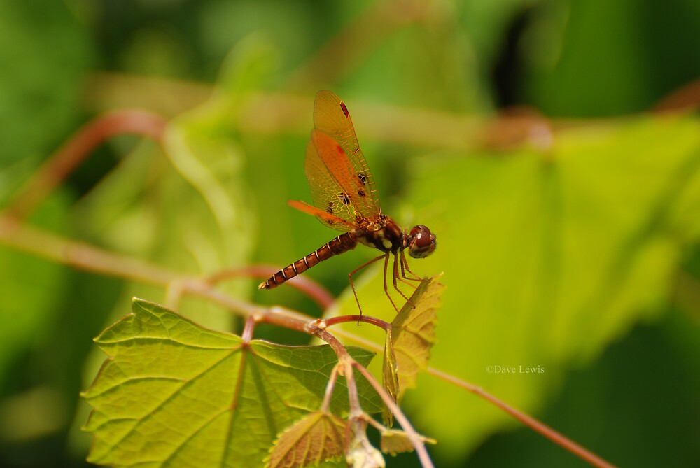 dragon fly 1 by ukgun