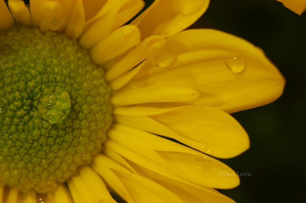 flower 1 by ukgun
