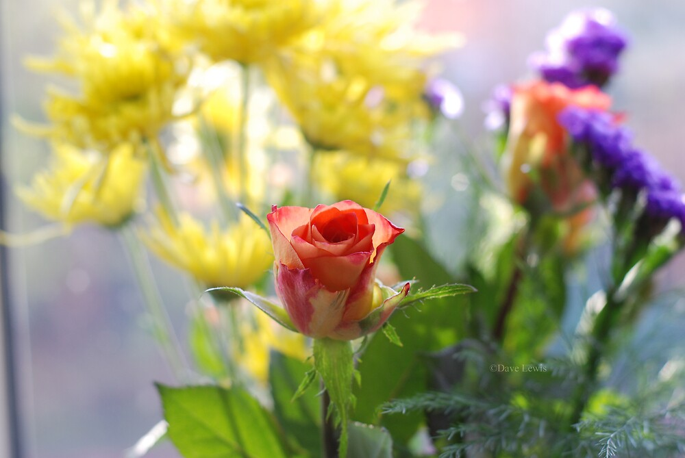 rose by ukgun