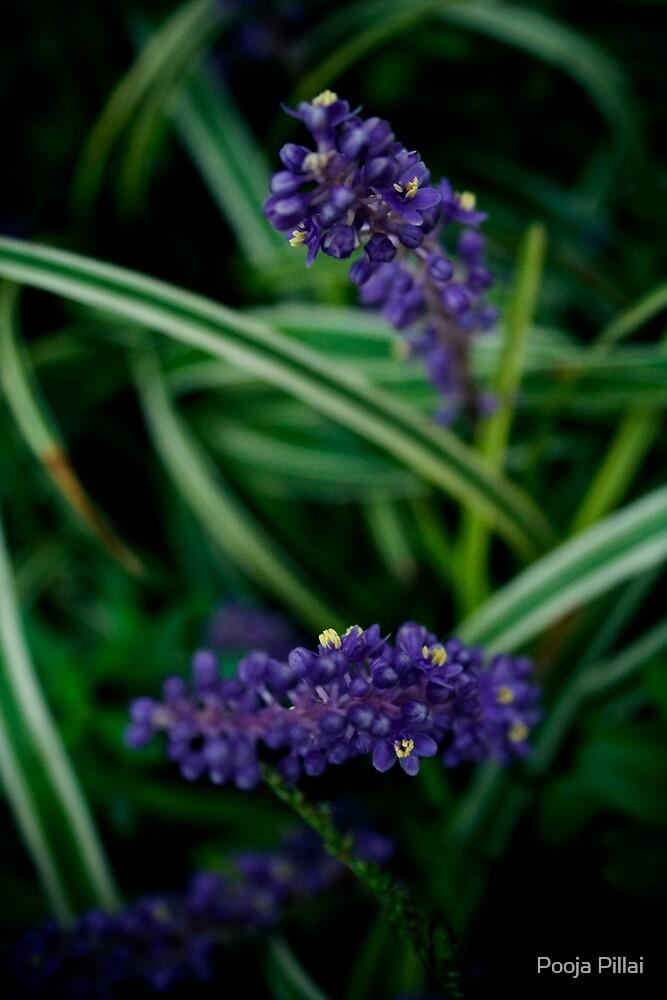 Coral Blue by Pooja Pillai