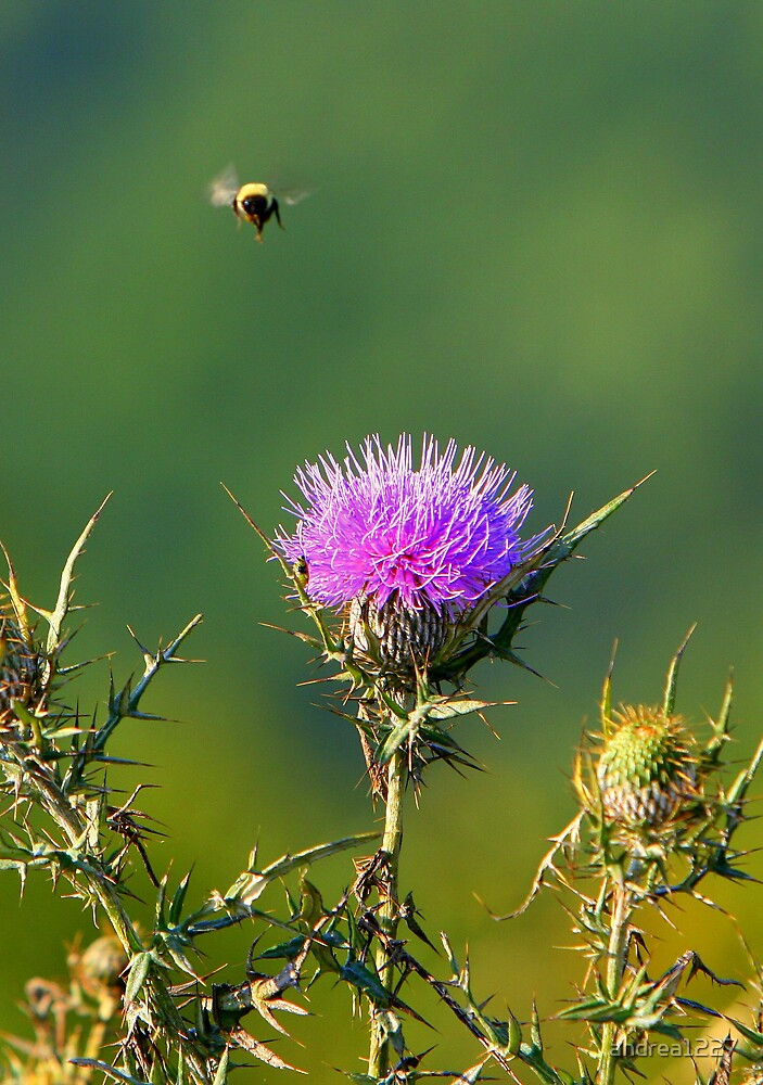 Bumble and Thistle by andrea1227