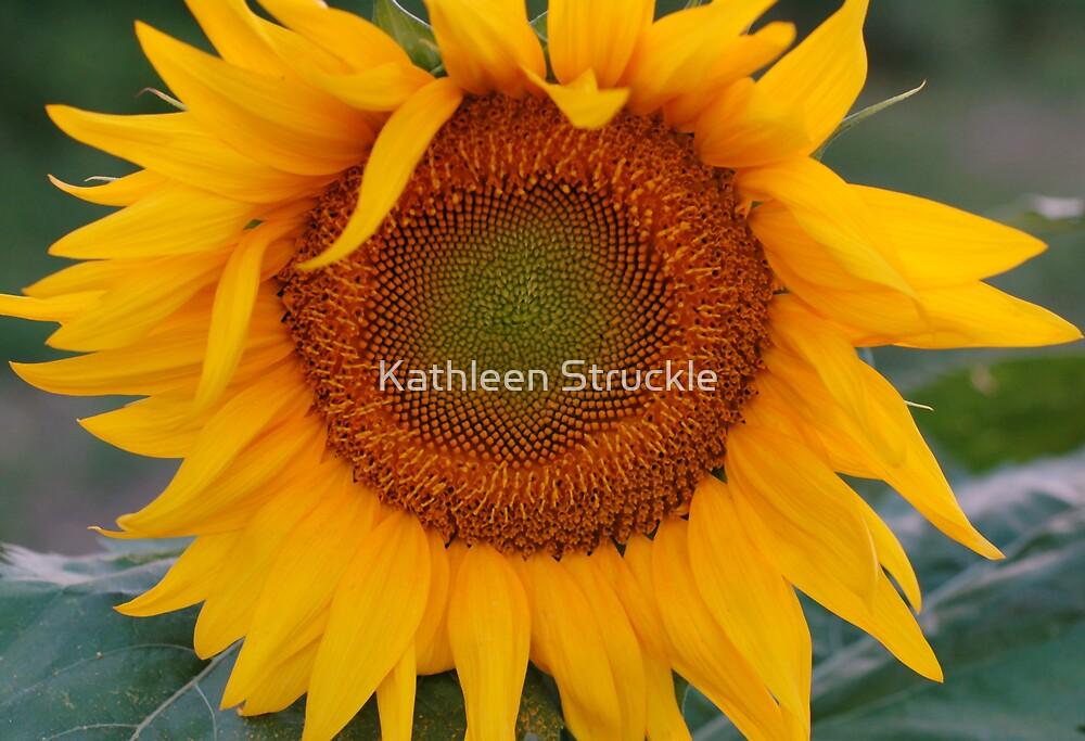 Sunflower by Kathleen Struckle