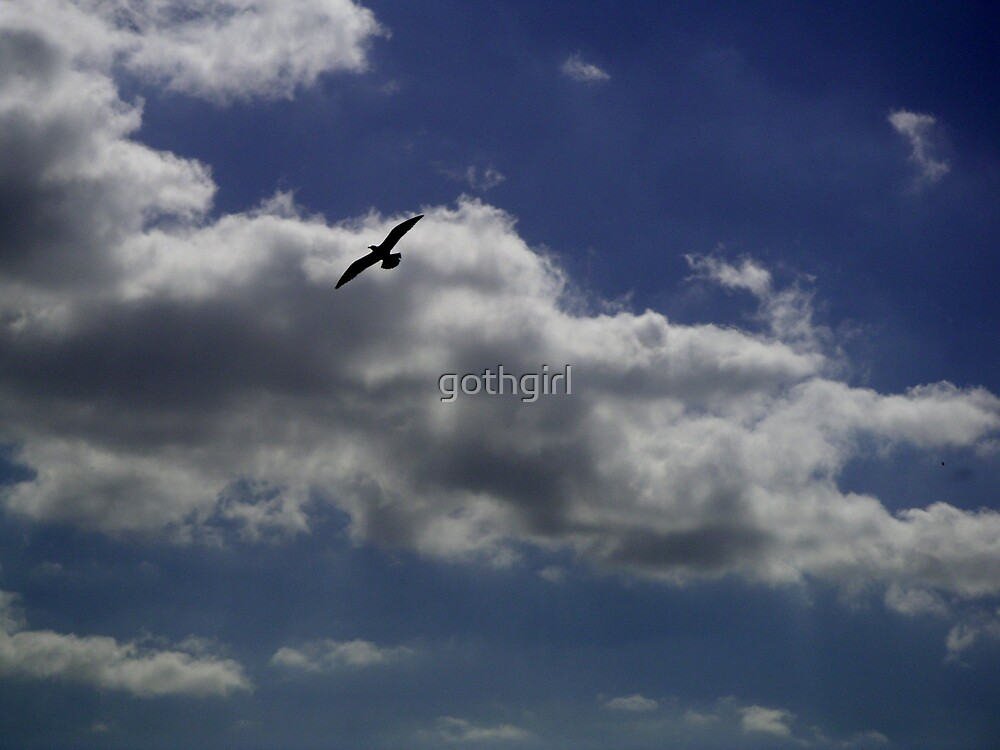 seagull sky by gothgirl
