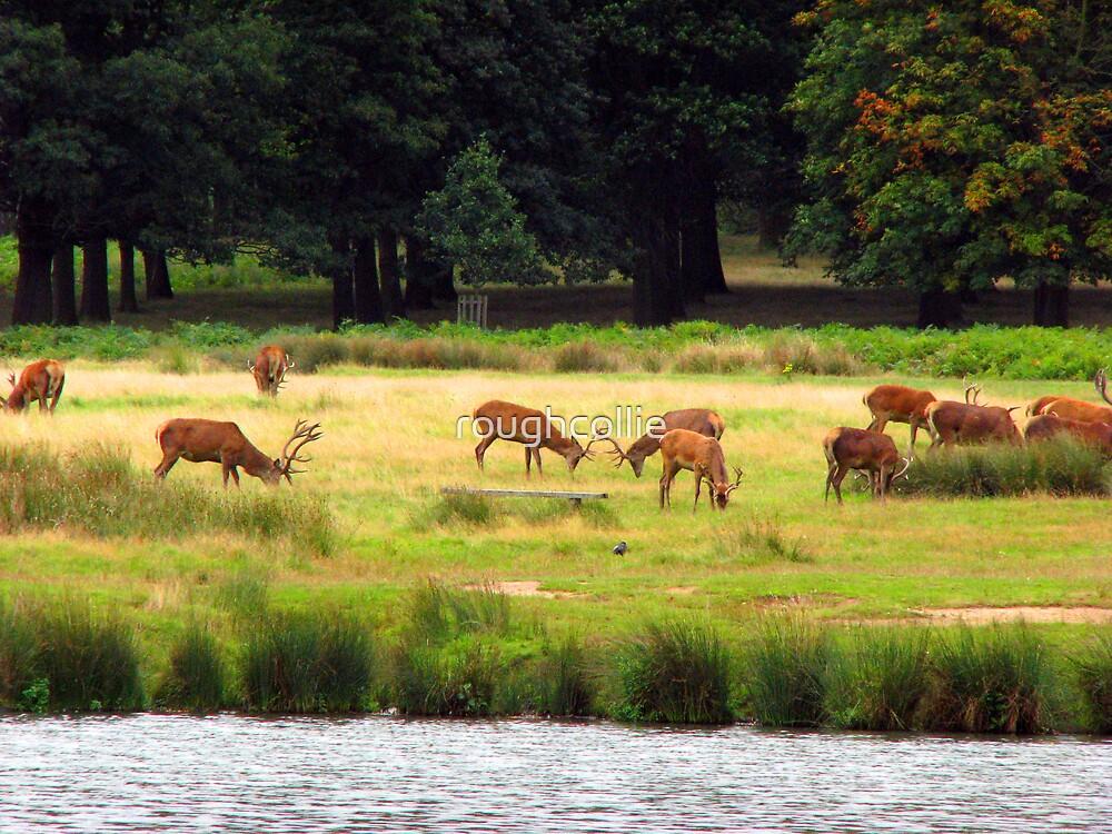 Deer in Richmond Park by roughcollie