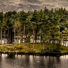 Tarn Hows, Cumbria by JMChown
