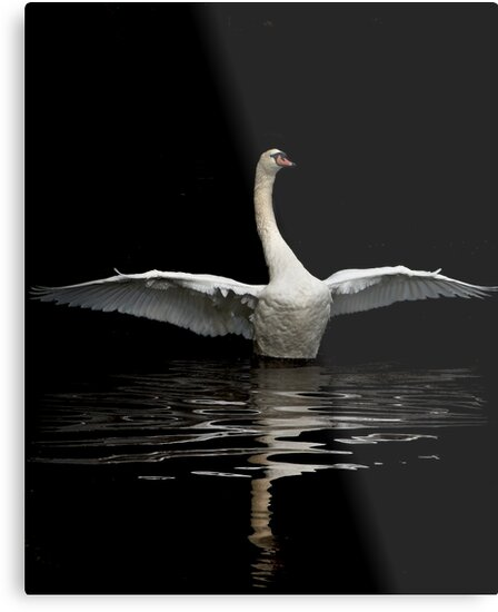 Dance of the Swan I by Chris Clark