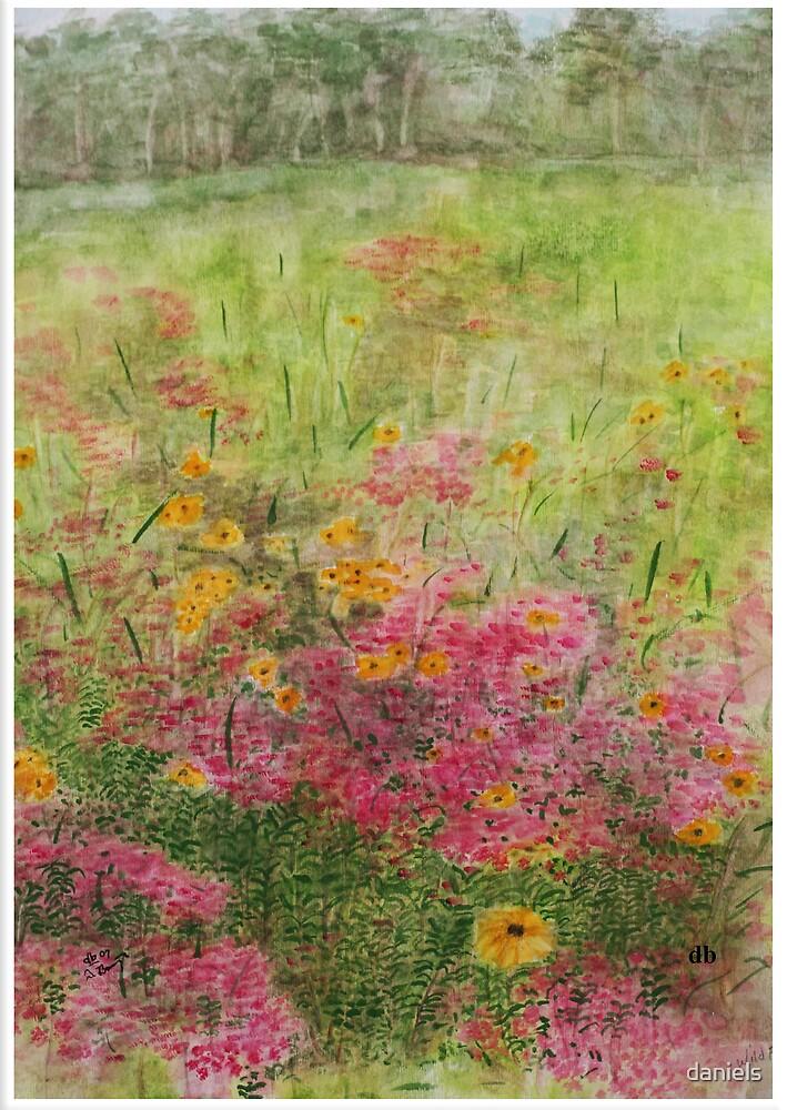 wildflowers by daniels