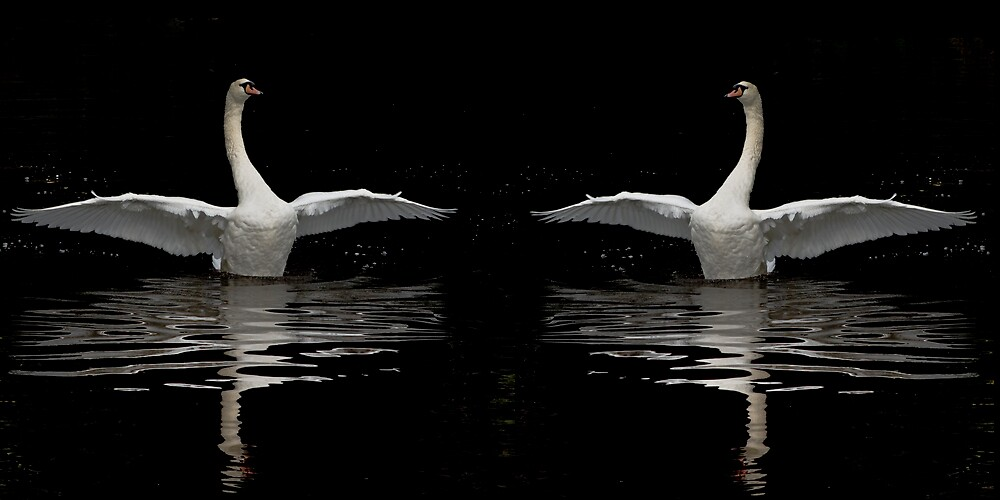 Dance of the Swans II by Chris Clark