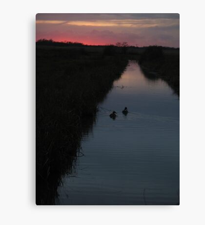 Swimming into the Sunset Canvas Print