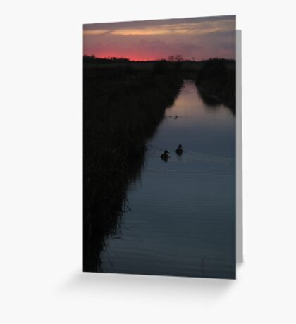 Swimming into the Sunset Greeting Card