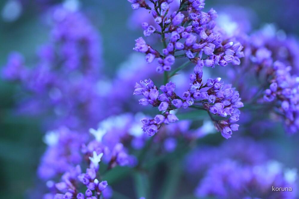 purple haze by koruna