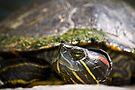Lazy Turtle  by LudaNayvelt