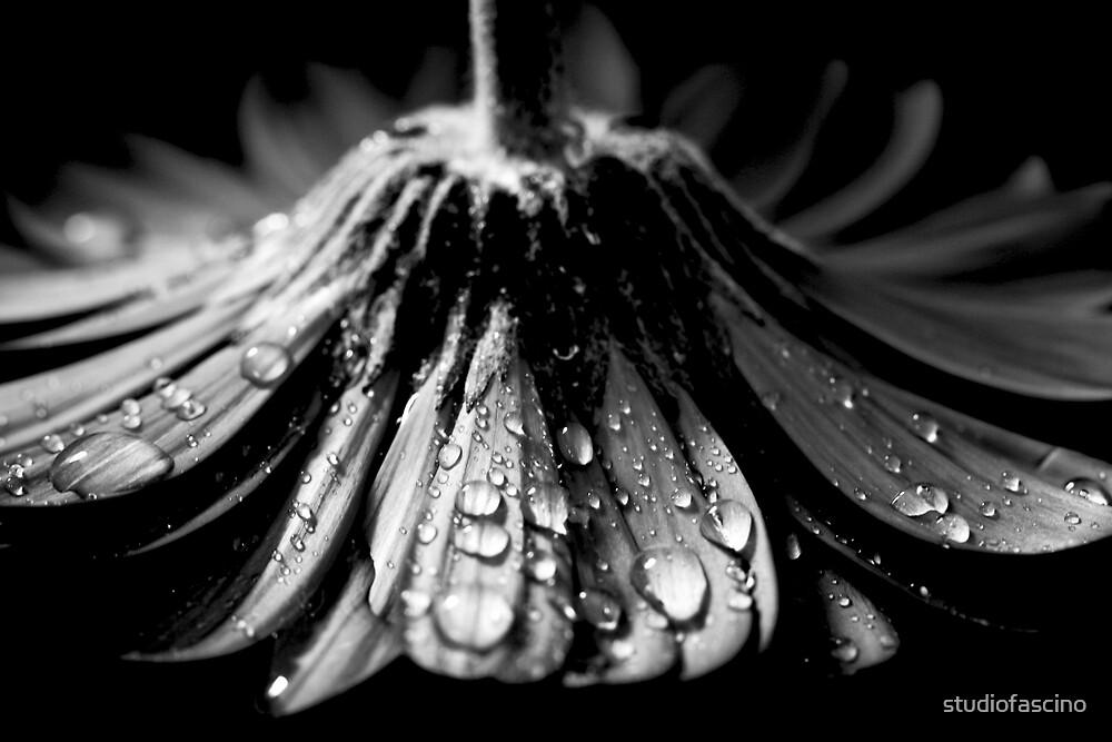wet skirt by studiofascino