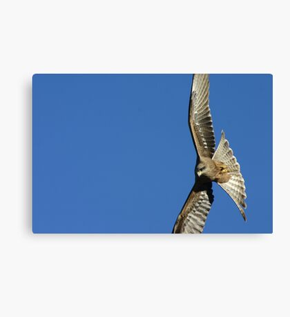 Vertical Flight Canvas Print