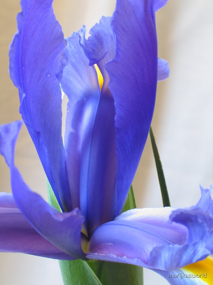 Iris by marijkasworld
