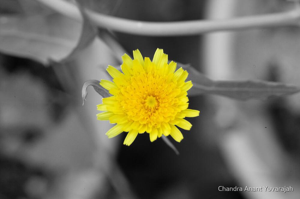 Pollenation by Chandra Anant Yuvarajah