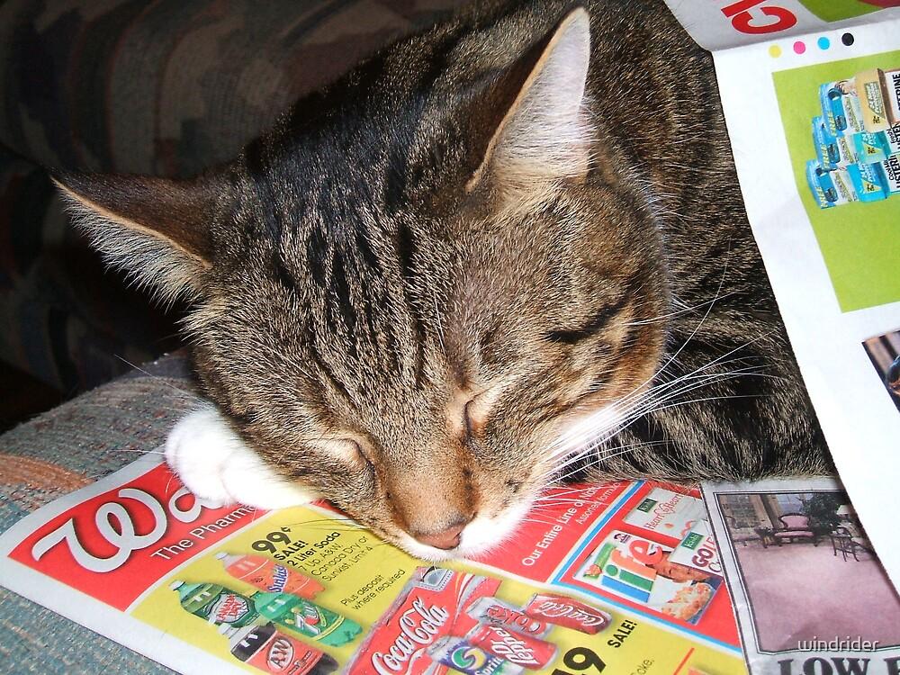 Cat nap by windrider