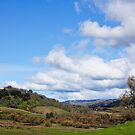 old barn on Mt Hamilton rancho by David Chesluk