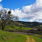 view toward Lick Observatory from lower down on Mt Hamilton by David Chesluk