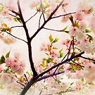 Asian Cherry Blossoms by Jessica Jenney